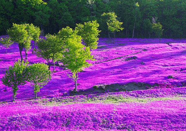 芝櫻滝上公園