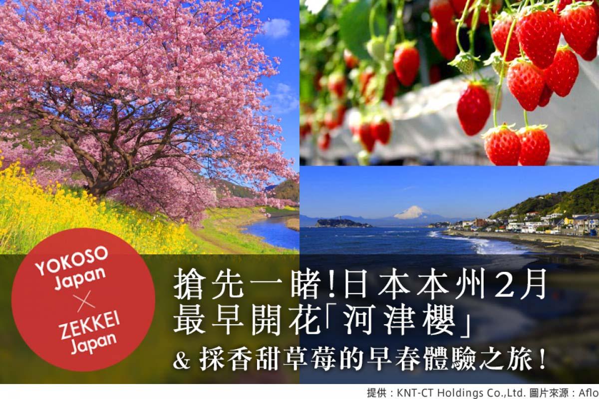 搶先一睹!日本本州2月最早開花「河津櫻」&採香甜草莓的早春體驗之旅!