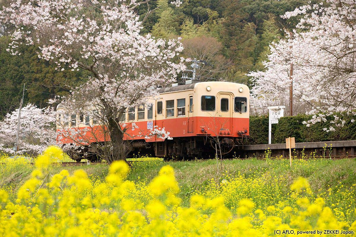 【Japan Travel Advice】 Mastering the Rail System