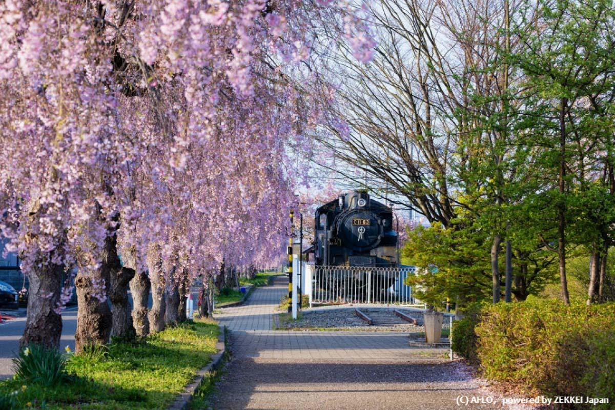 日中線記念自転車歩行者道の桜|福島県