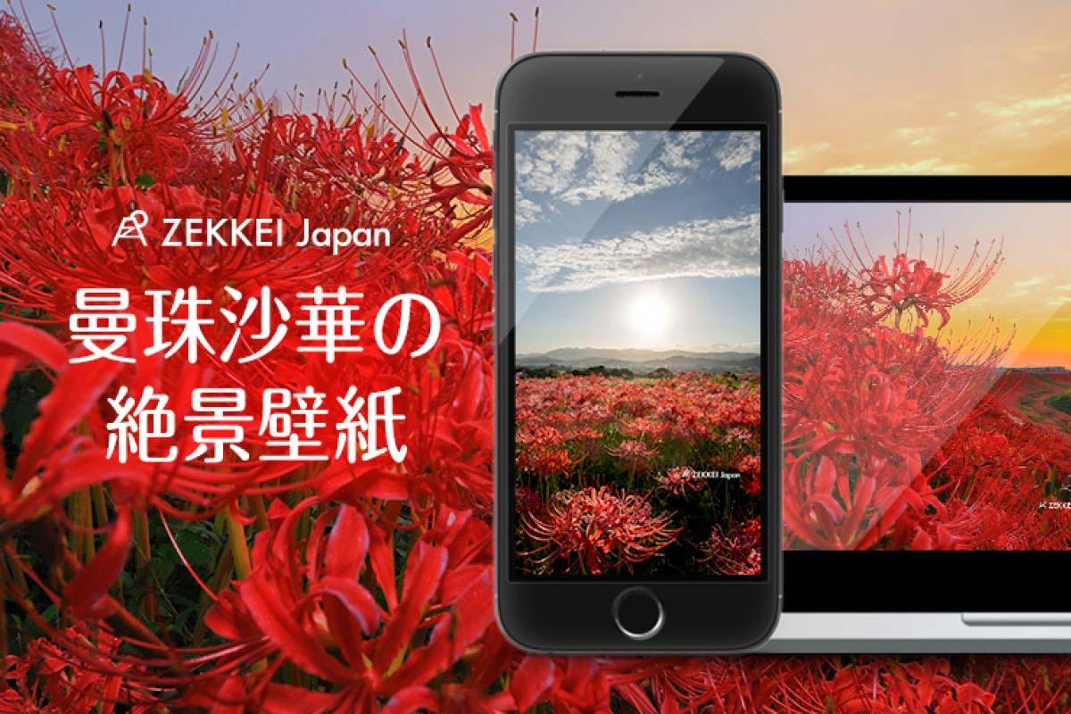【あなたのパソコン・スマホに絶景を】秋空に咲く曼珠沙華の絶景壁紙をプレゼント