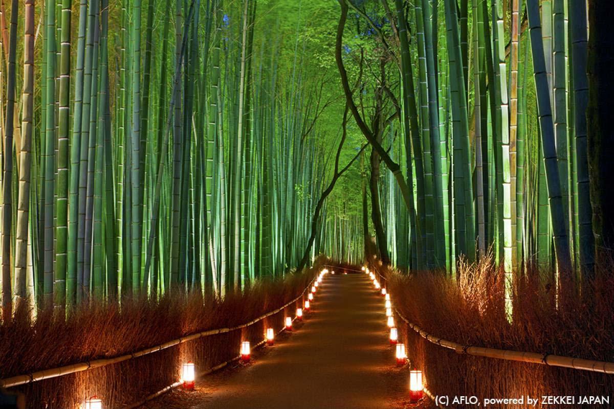 日本の冬は美しい!世界が絶賛する12月の絶景ベスト5!