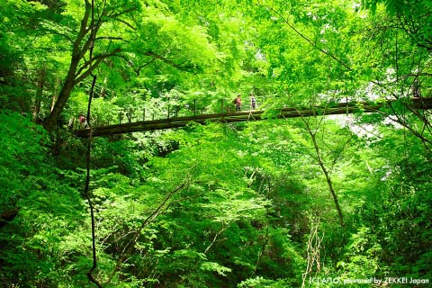 'A suspension bridge effect' will make your love improve?
