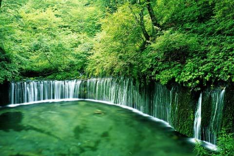 暑氣全消!在日本享受綠意繚繞的森呼吸之旅