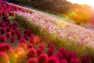 2016年人気の絶景ランキング発表 1位はあの有名なお花畑でした!!