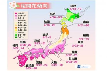 2017年桜開花情報最新版!
