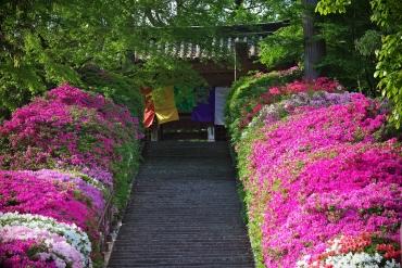 目の覚めるような鮮やかさ!晩春を彩るツツジの絶景5つ