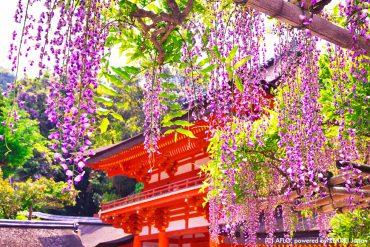 【日本旅行のアドバイス】神社でお詣りしてみよう!第2回 ―神様の手伝いをしている動物たち