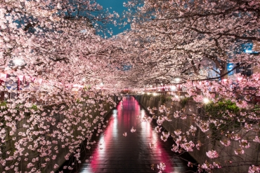仕事帰りに見に行こう!東京夜桜の絶景8選