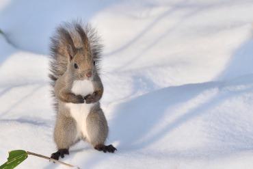 写真を撮ったらSNSで注目の的になれることまちがいなし!北海道で出会える動物がかわいすぎる