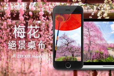 <1月絕景桌布>告知春來訪-梅花絕景桌布大放送!