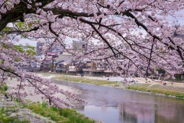 【日本。京都】鴨川沿岸的5個奇特景象