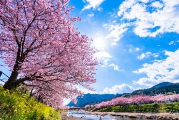 【2018年早春小旅行】不只河津櫻!日本初春伊豆絶景遊趣多