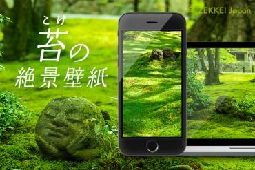 <5月の絶景壁紙>癒しの苔の絶景をあなたの待ち受けに