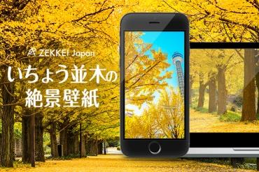 <10月の絶景壁紙>黄金に染まるいちょう並木の散歩道を、あなたのパソコンやスマホに