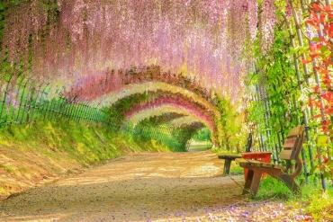多彩繽紛浪漫春天! 連日本人都讚嘆的4月份5大絕景