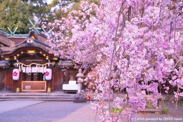 春意來襲!精選3月份五大日本必訪絕景