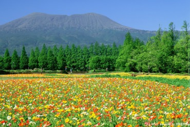 Scenery that Draws You In! ZEKKEI's Best 5 Autumn Flowers