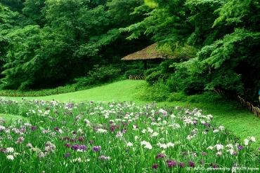 東京GO!從江戶三大祭「淺草三社祭」踏進東京古今絕景之旅