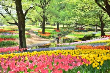 日本荷蘭風!春季走訪鮮豔夢幻鬱金香世界