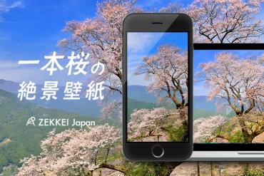 <2月の絶景壁紙>凛と咲く一本桜の絶景をあなたの待ち受けに