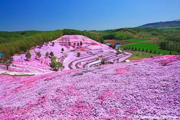【夢のようなお花畑】 全国の芝桜(シバザクラ)絶景6選