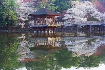 日本の原風景がここに。奈良の桜を見に行こう!