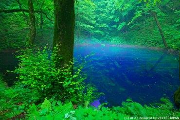 難以言喻!一定要親身到訪才能明白的日本「青色絕景」