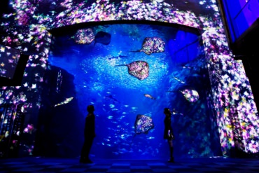 "【ZEKKEI Event】Step Into a Fantasy World: Shin-Enoshima Aquarium's ""ENOSUI×teamLab Night Wonder Aquarium 2015"""