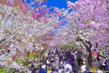 今年の大阪のお花見はここへ!おすすめの桜の名所5選