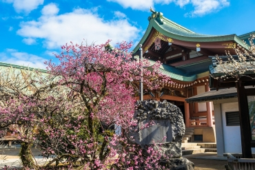 年末に京都に行くなら?地元民がおすすめする3つの楽しみ方