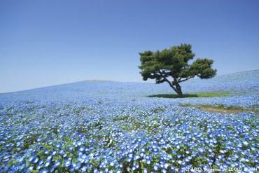 東京近郊賞花去 一張票教你翻玩五月3大花季