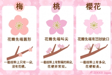 一張圖讓你搞懂!如何分辨梅花,櫻花,桃花的區別