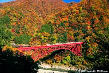这里,真的是日本吗?梦幻而夺目的日本枫叶绝景~交通工具篇~