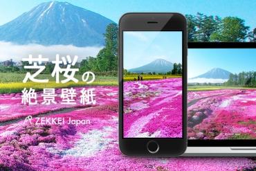 <3月の絶景壁紙>メルヘンチックな芝桜の壁紙をあなたの待ち受けに