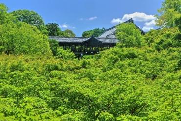 京都の初夏の風物詩!「青もみじ」きらめくお寺4選