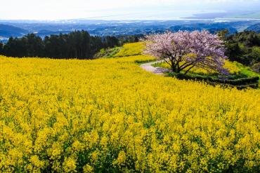 素敵なロケーションで楽しめる九州の桜スポット5選