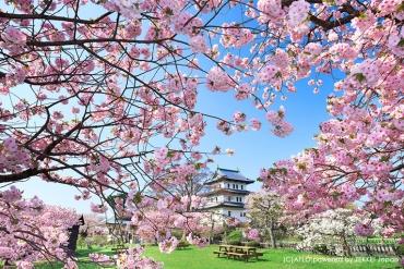 5月の北海道は春満開!北海道の桜の絶景6選