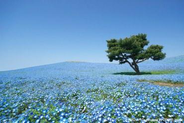 適合出門的好天氣!5月絕美花景精選
