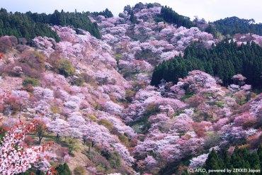 【2017賞櫻指南】來看看日本人所推薦的賞櫻景點
