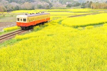 いすみ鉄道と小湊鉄道のはしご乗車も!のどかな菜の花絶景3選