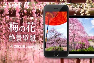 <1月の絶景壁紙>春の訪れを告げる梅の絶景をあなたの待ち受けに