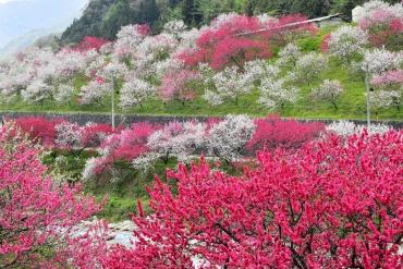米CNNの2018年訪れるべき場所に選ばれた「長野県」!春に訪れたい絶景スポット5選