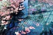 東京都あきる野市にある『モネの池』のような2つの湧水池
