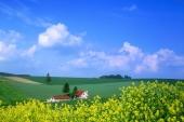 【日本。夏之北海道】美瑛精選5大景點 | 跟著我走 | 琳許