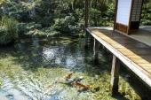 【日本の水の都】「鯉の泳ぐまち」長崎県島原に涼みにいこう