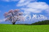 直飛只要4小時,東北賞櫻更方便! 春季遊日本「岩手」5大絕景