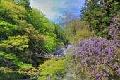 日本的原始風景在這裡!精選享受德島縣秘境「祖谷」的7個方法