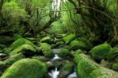 遺世而獨立的人間仙境! 世界遺產「屋久島」必訪5大能量絕景