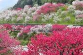 榮獲美國CNN大力推薦的日本最佳旅遊地點! 長野縣5大春季絕景懶人包